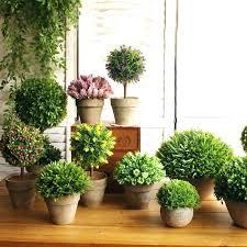 best indoor house plants best indoor house plants indoor house plants indoor house plants