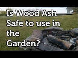 is wood ash safe to use in a vegetable garden youtube