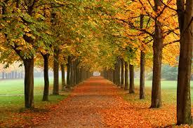 autumn pumpkin wallpaper widescreen free fall screensavers wallpapers group 47