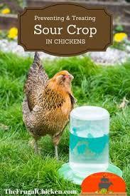 Backyard Chickens Magazine Backyard Chickens U0026 Apple Cider Vinegar A Marriage Made In Heaven