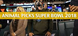 Ozzy The Grizzly Bear Picks The Eagles To Win The Super Bowl Local - animal super bowl predictions and picks 2018 topbet