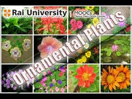 identification of ornamental plants basics of gardening