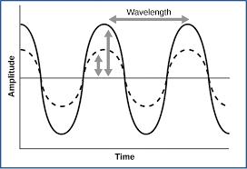 hearing and vestibular sensation boundless biology