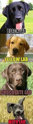Black Lab Meme - not even once people dogs pinterest black labs meme