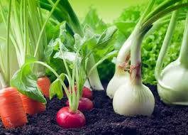 tips for starting a vegetable garden sa home owner