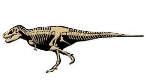 amazing facts about tyrannosaurus rex t rex dinosaur cartoon