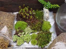 download moss terrarium supplies solidaria garden