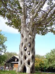 cool trees 15 strangely shaped trees weird trees plants and mother nature