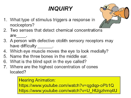 What Is The Blind Spot Special Senses Ch Ppt Download