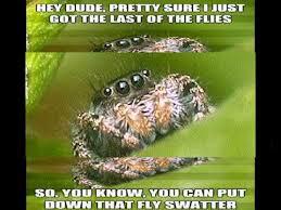 Cute Spider Meme - the sad world of the misunderstood spider youtube