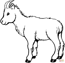 goat face coloring page kids drawing and coloring pages marisa