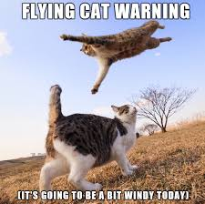 Flying Cat Meme - the wind machine will crank today take your pic flying cat warning