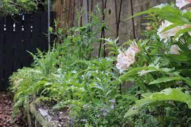 the designer u0027s own garden hedge