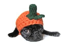 small halloween gifts dog costume halloween pet costume pumpkin hat for cat dog x small