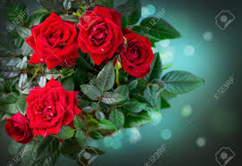 roses flowers roses flowers stock photo picture and royalty free image
