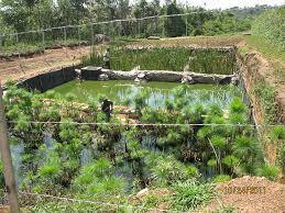self sustaining garden mulvannyg2 architecture designs self sustaining gashora girls