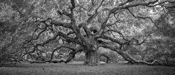 oak 2016 clyde butcher black white photography