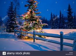 decorated christmas tree forest night stock photos u0026 decorated