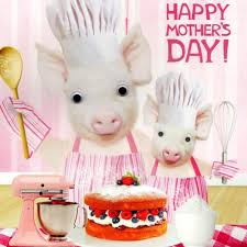 baking pigs happy mother u0027s day card cards love kates