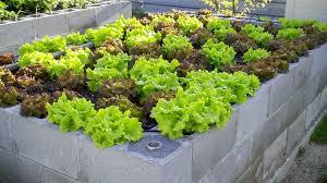 affordable cinder block garden ideas u2014 jbeedesigns outdoor