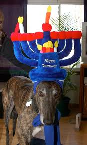 chanukah hat meet the 8 dogs of hanukkah rover