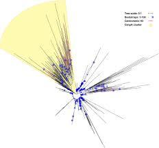evolutionary dynamics of the kinetochore network in eukaryotes as