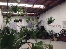 181 best plants indoor jungles images on pinterest indoor