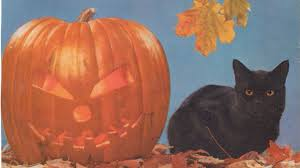 halloween kittens cat animal animals cats lion cat lions art paw images hd 16 9