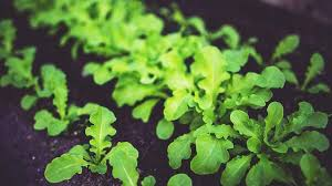 a beginner u0027s guide to growing an edible garden sbs food