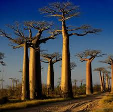 the world s most unique and trees travelerspress