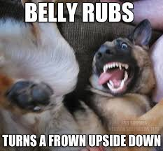 Frowning Dog Meme - turn that frown upside down with a belly rub german shepherd