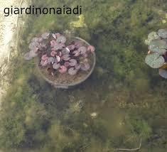 Vasche Da Giardino Per Pesci by Il Giardino Delle Naiadi Filtrazione Naturale E Tecnica In Un