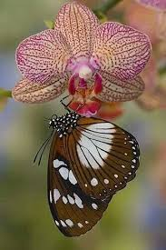 83 best orchids and butterflies images on beautiful