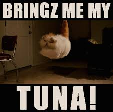 Funny Memes Gifs - floating angry cat gif on imgfave