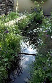 native aquatic plants uk 403 best water in the garden images on pinterest water gardens