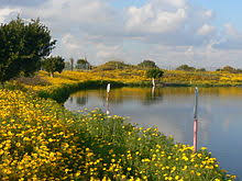spring season wikipedia