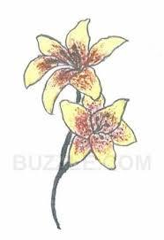 nice lily tattoo sketch tattooshunter com