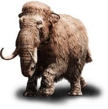 mammoet en olifanten evolutie prehistoric