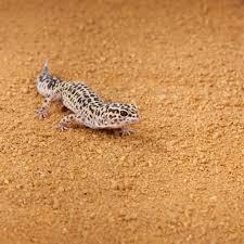 halloween mask leopard gecko exo terra sand mat desert terrarium substrate reptile substrates