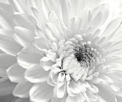 white flower white flower photo 796 from freewebphoto