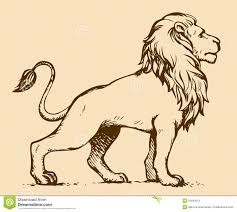 lion lioness vector drawing stock vector image 65279458