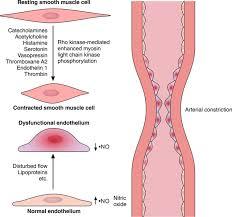 acute coronary syndromes circulation