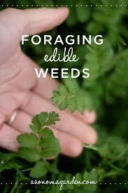 edible california native plants 25 best wild edibles ideas on pinterest edible plants edible
