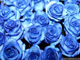blue roses blue roses wallpapers frankenstein