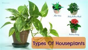 benefits of houseplants types of houseplants that clean indoor air and lower stress