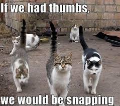 Meme Kitty - the best damn cat memes on the internet craveonline