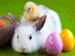 easter pictures seriously guys baby rabbits and chickens are not appropriate as