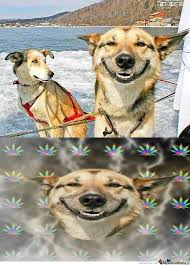 High Dog Meme - high dog is high as f ck by abdelkader meme center