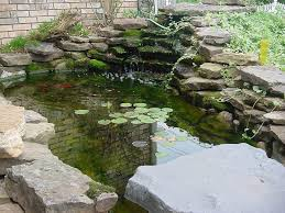 surprising small backyard fish ponds pictures decoration ideas