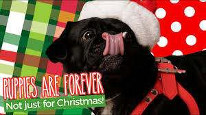 quotes for christmas songs 100 quotes about hero dogs former military working dog